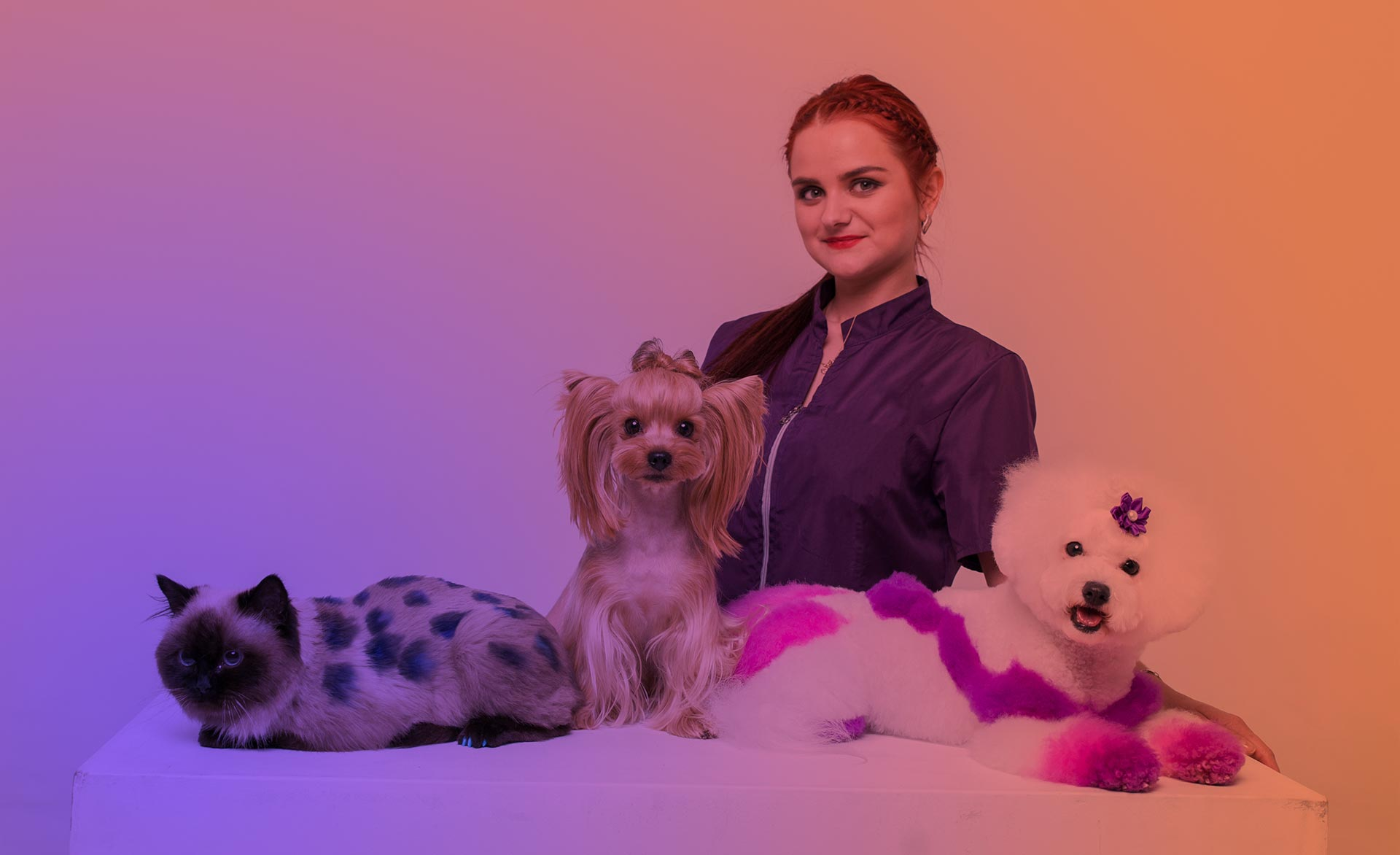 фото грумера салона для собак и кошек на Позняках Beauty Pets Алёны Салата