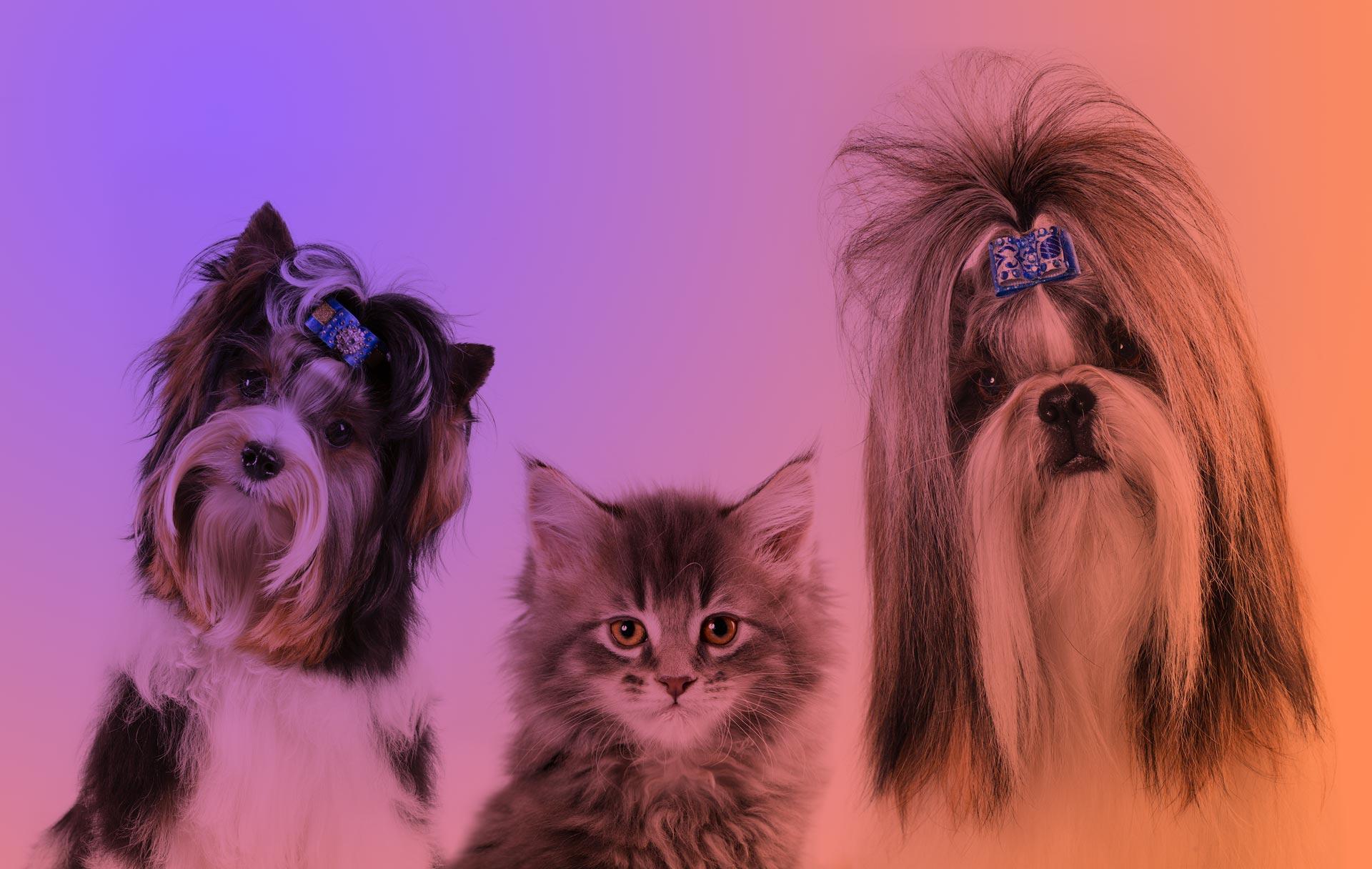 собачки и кот в салоне Beauty Pets на Позняках