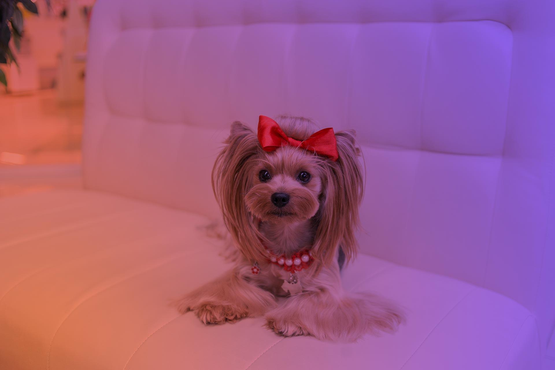 собачка в салоне Beauty Pets на Позняках в Киеве
